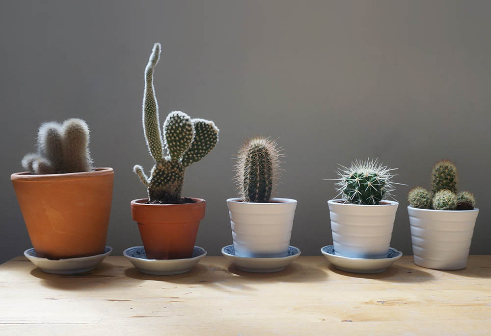 Plantas para casa