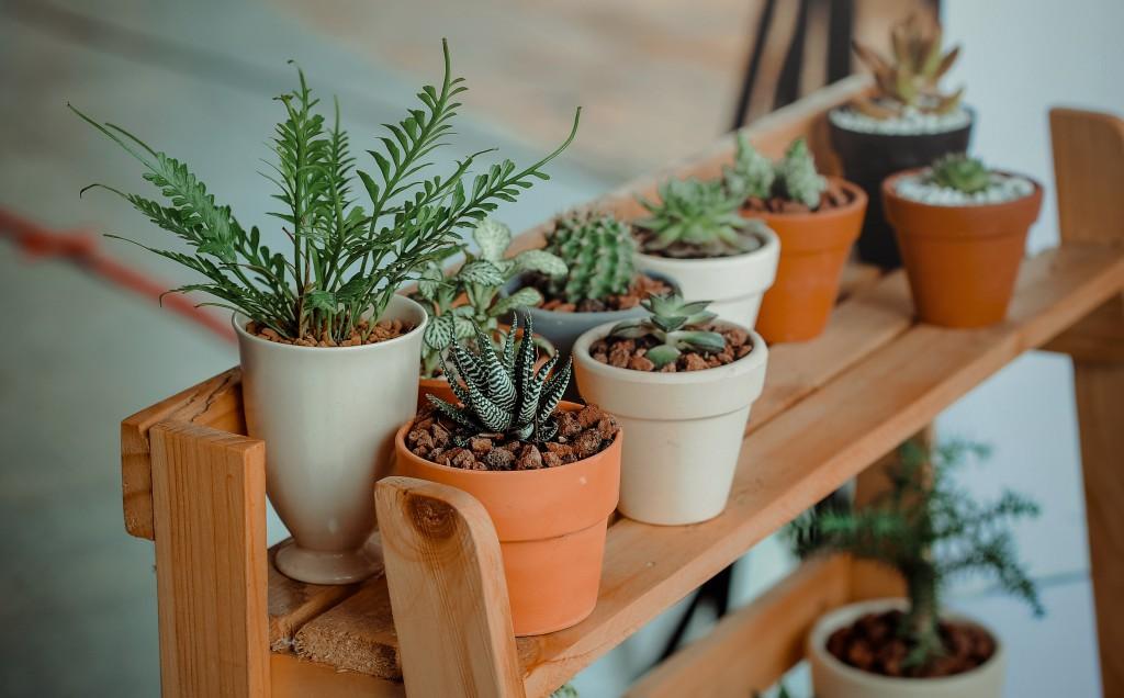plantas-para-casa